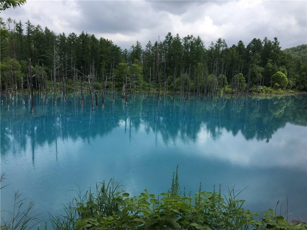 美瑛、青い池の画像(2枚目)